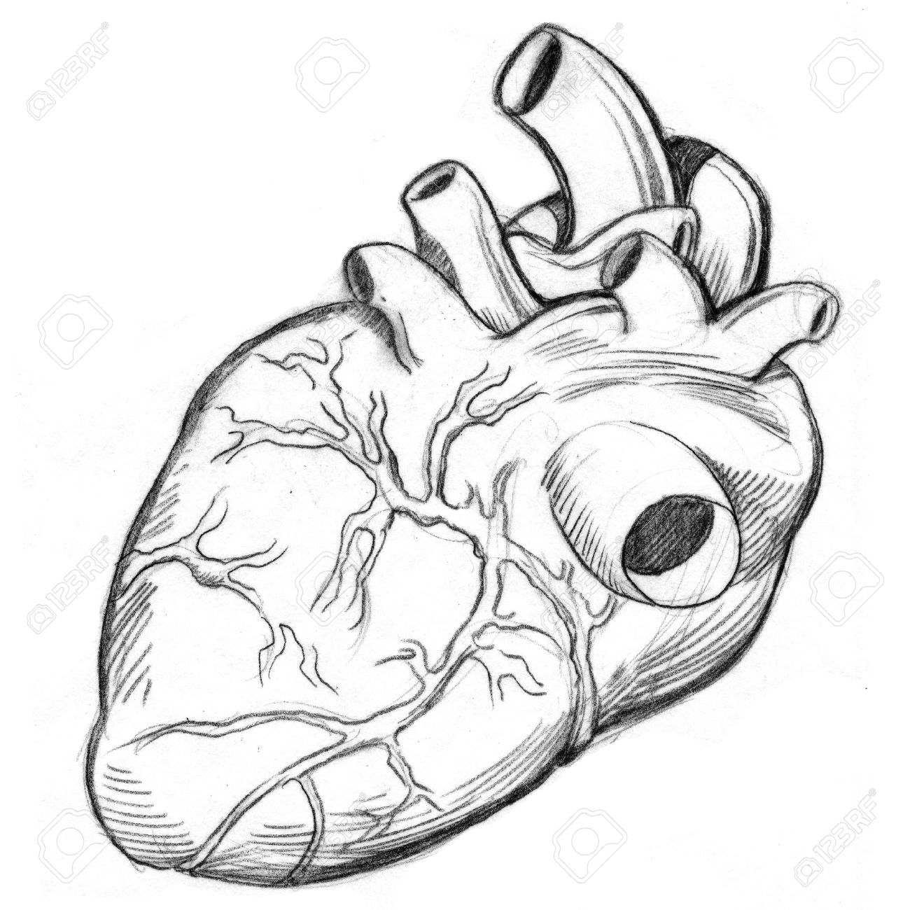 1300x1300 human heart drawing simple an image of a human heart drawing