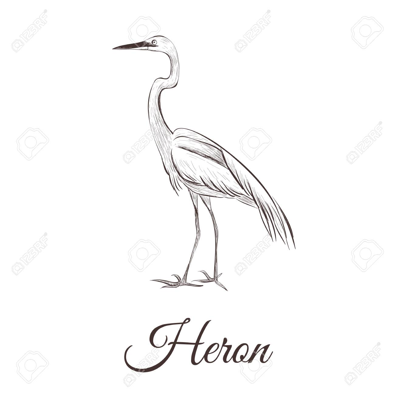 Blue Heron Drawing At Getdrawings