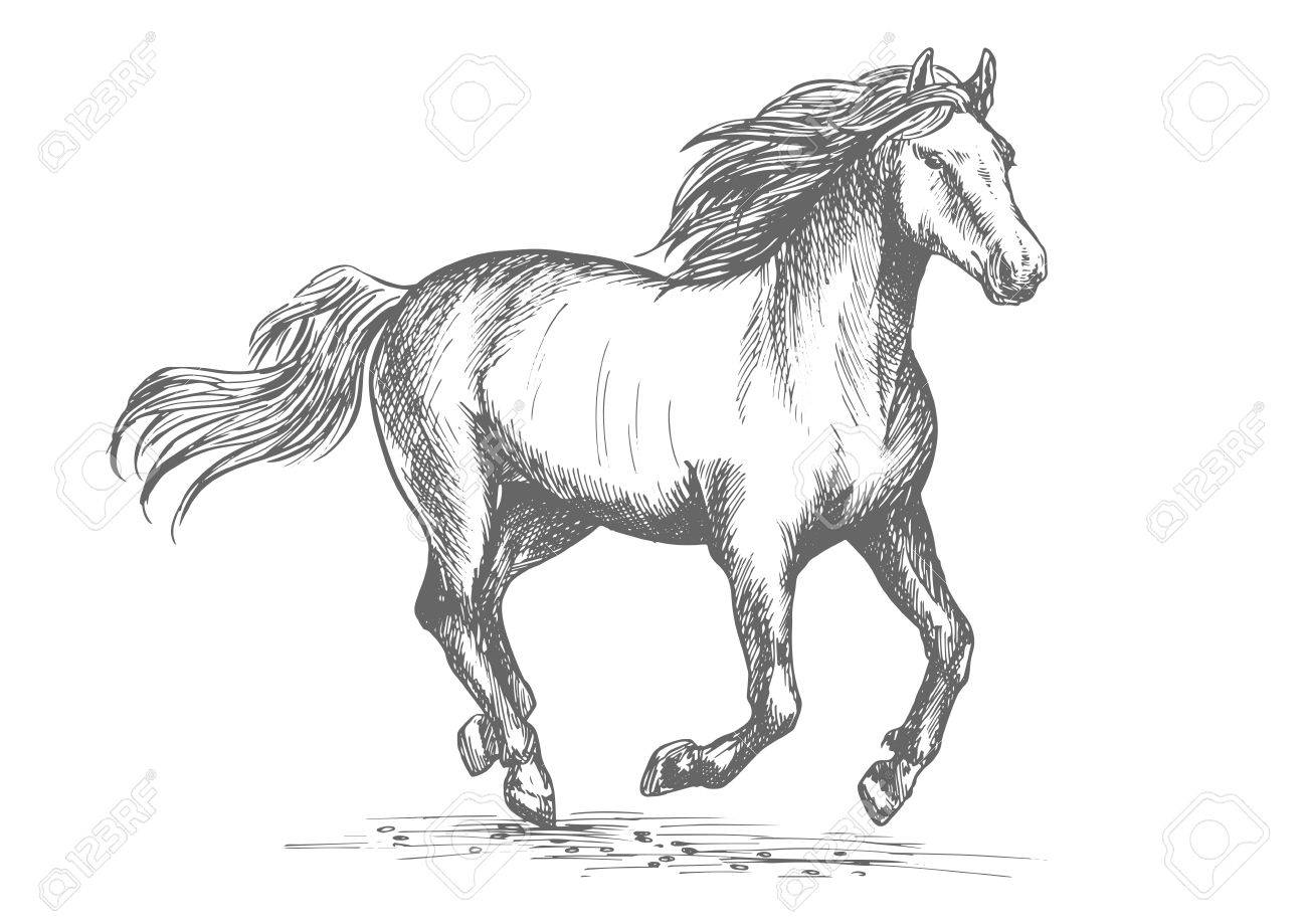 The Best Free Stallion Drawing Images Download From 216