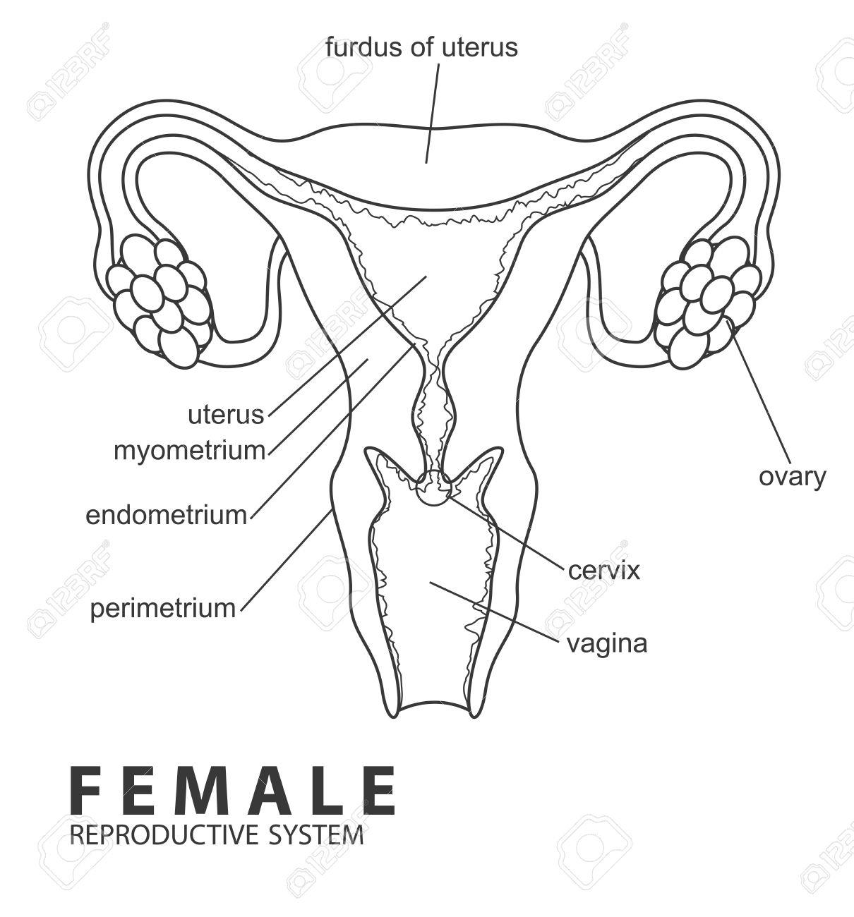Human Body Anatomy Drawing At Getdrawings