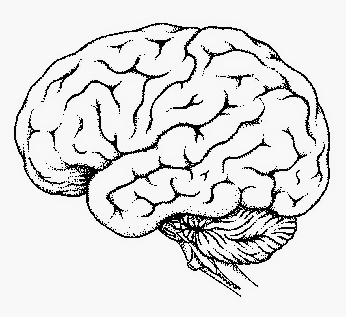 Human Brain Drawing At Getdrawings