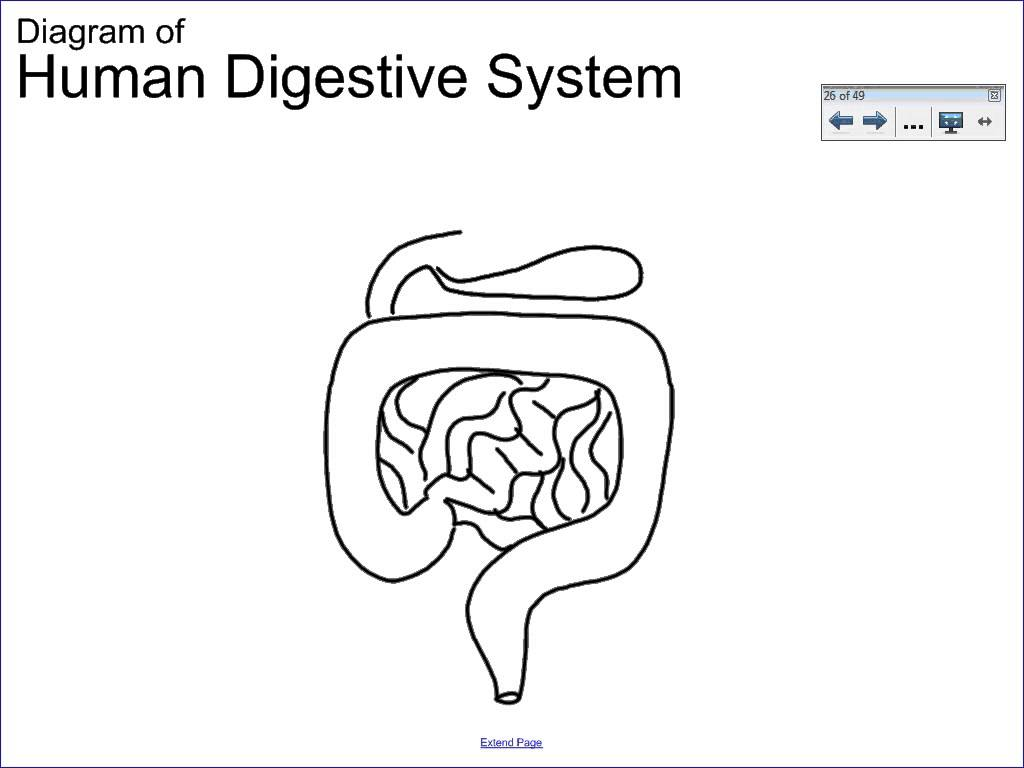 Human Digestive System Drawing At Getdrawings