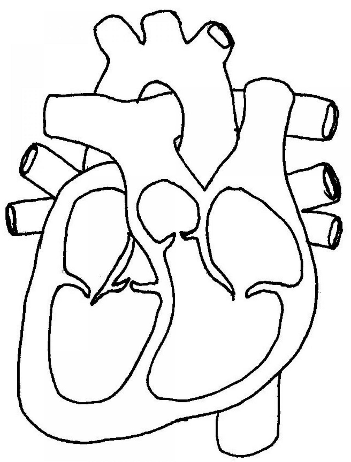 Human Heart Simple Drawing At Getdrawings