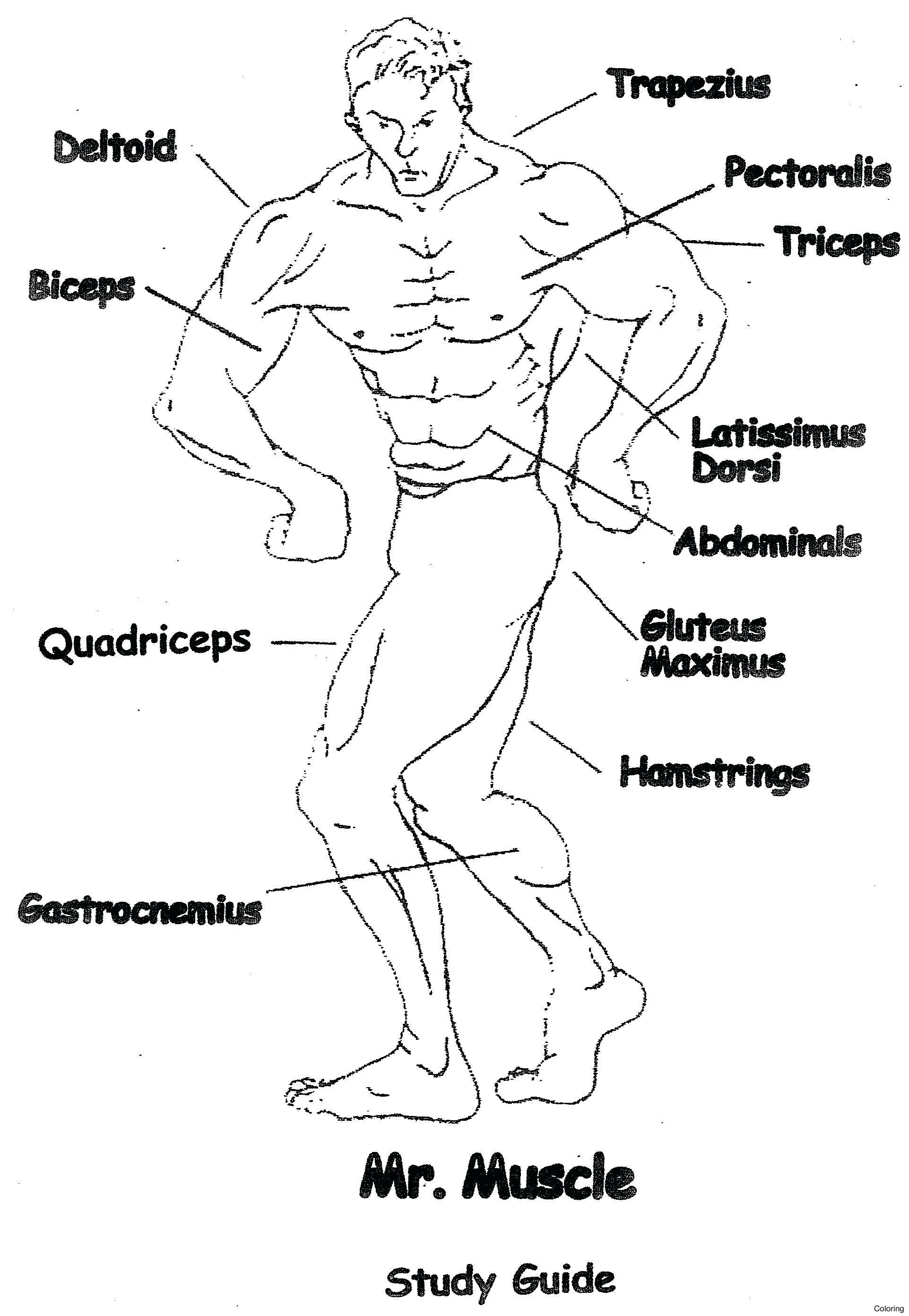 Student Worksheet Skeletal System