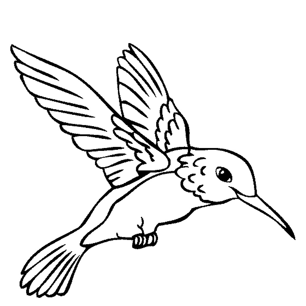Hummingbird Drawing Easy At Getdrawings