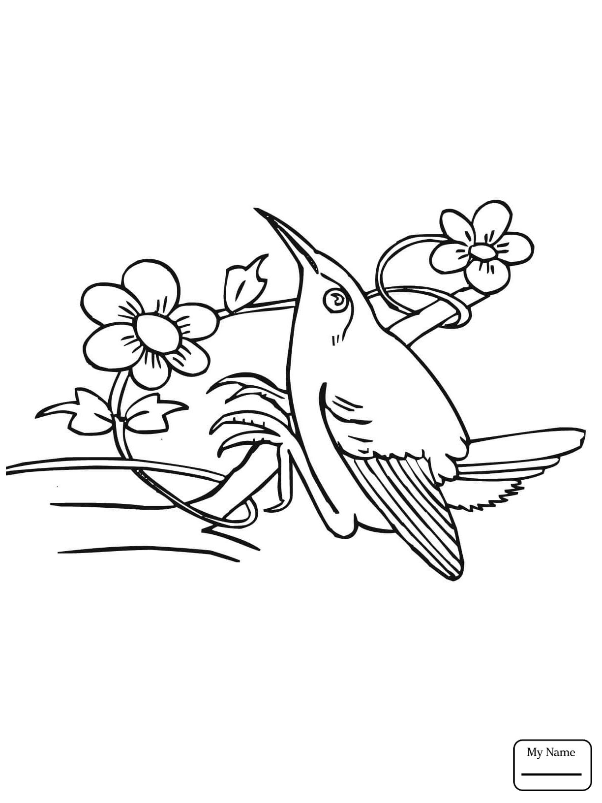 Bee Hummingbird Page Coloring Pages