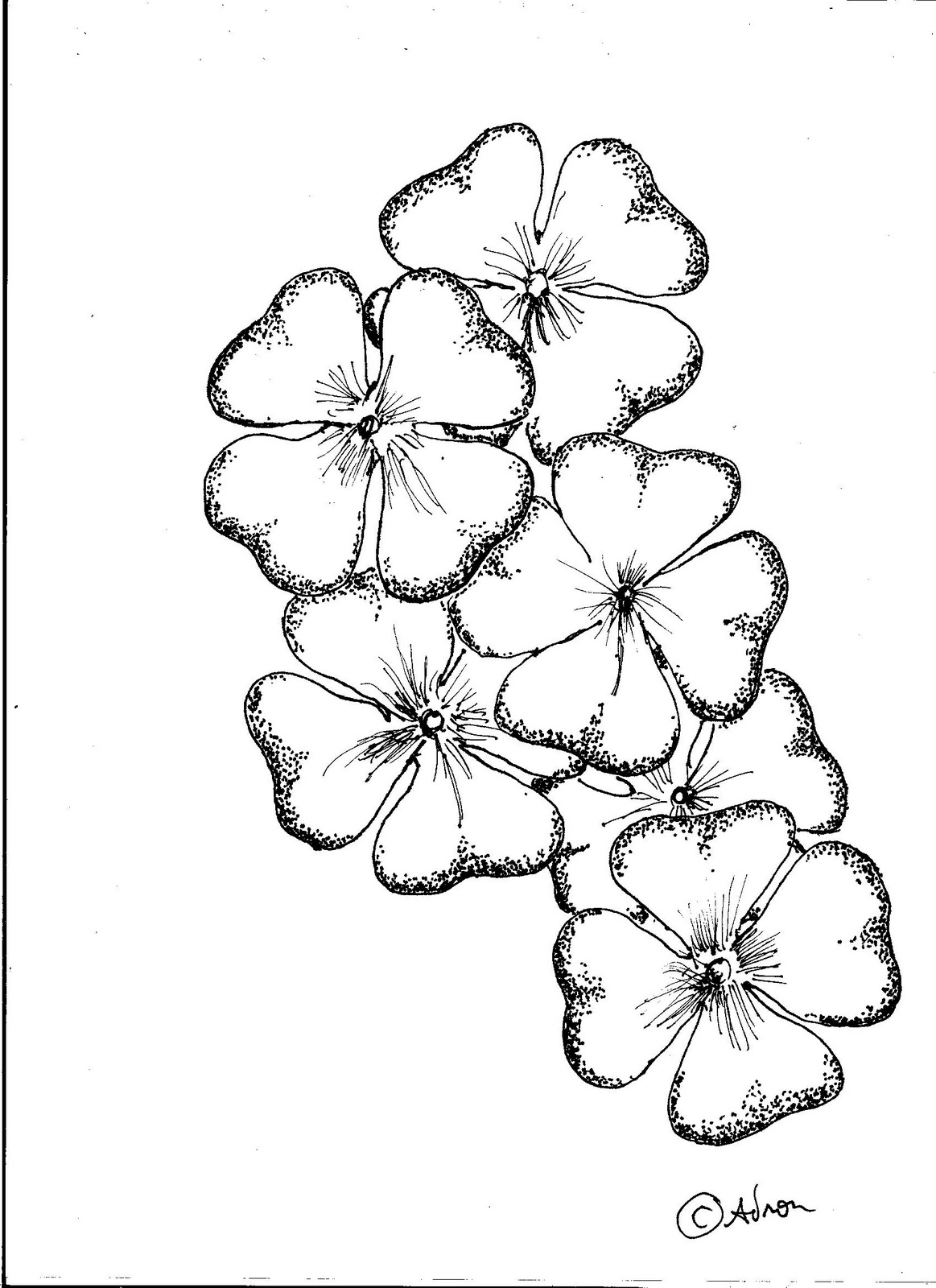 The Best Free Clover Drawing Images Download From 472