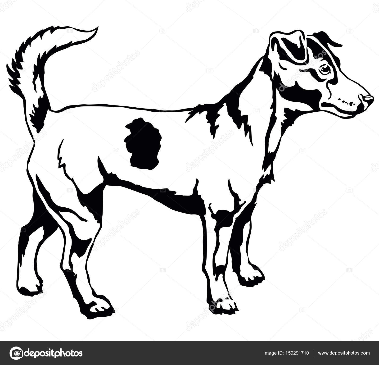 Jack Russell Drawing At Getdrawings