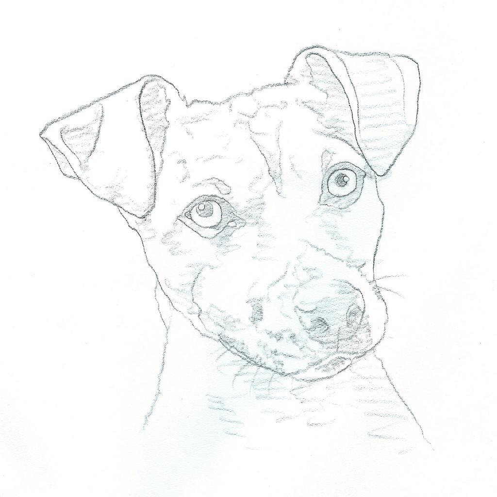 Jack Russell Terrier Drawing At Getdrawings