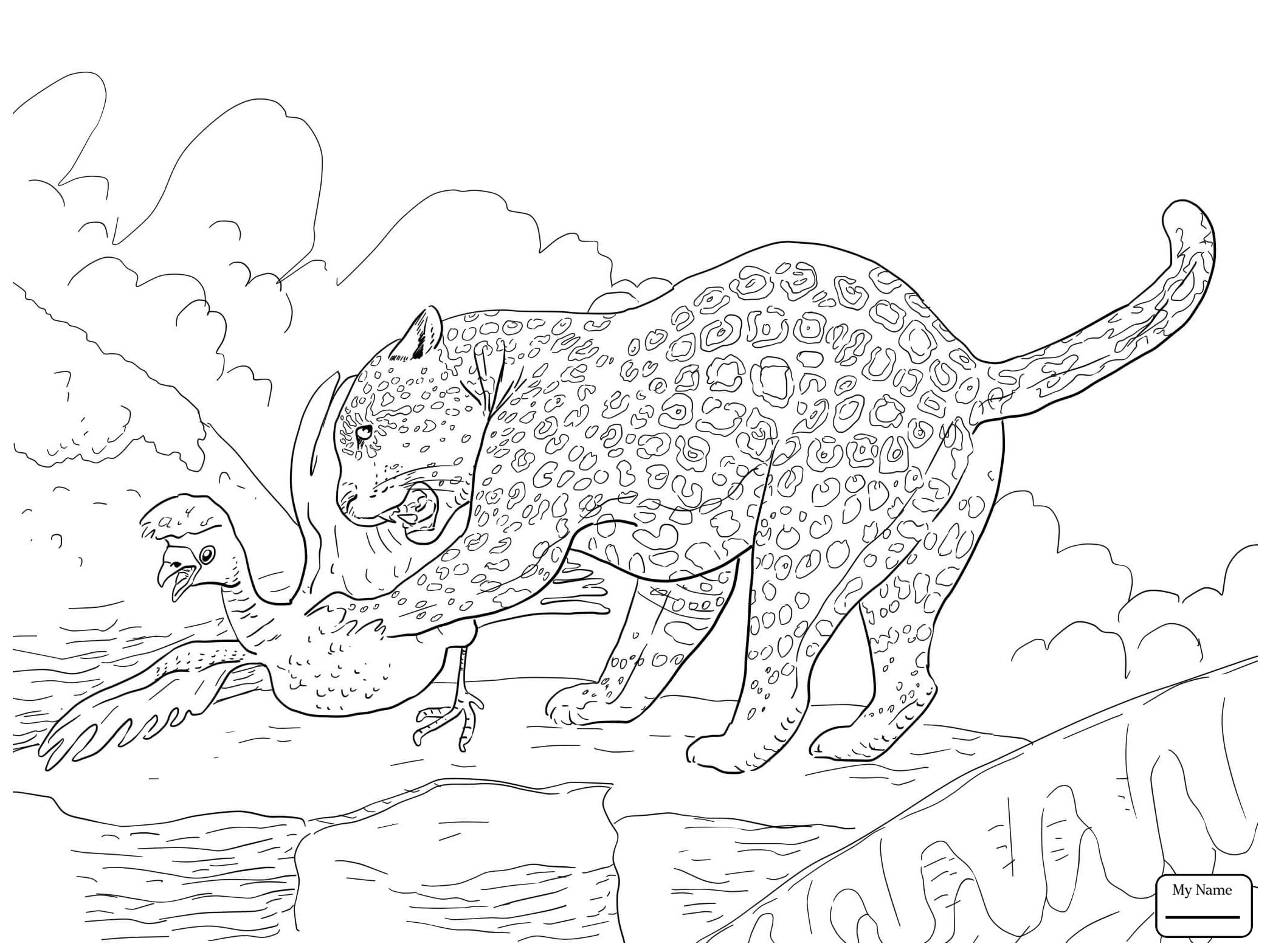 Jaguar Drawing At Getdrawings