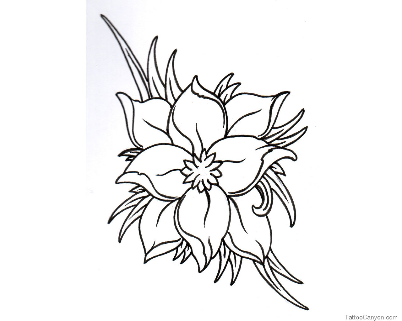 Jasmine Flower Drawing Tattoo At Getdrawings