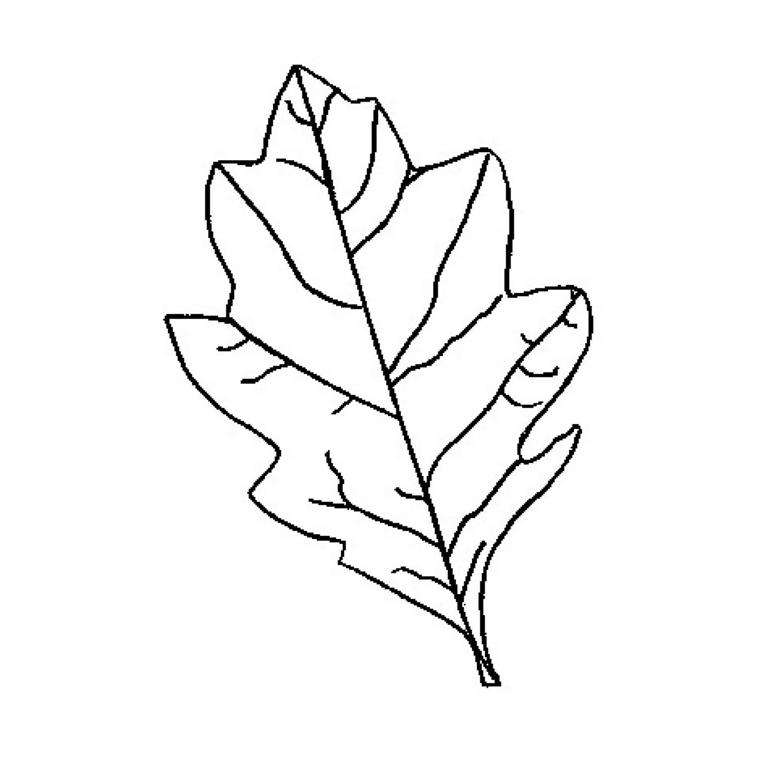 Jungle Leaves Drawing At Getdrawings