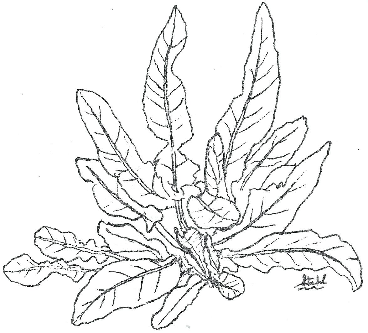 Jungle Plants Drawing At Getdrawings