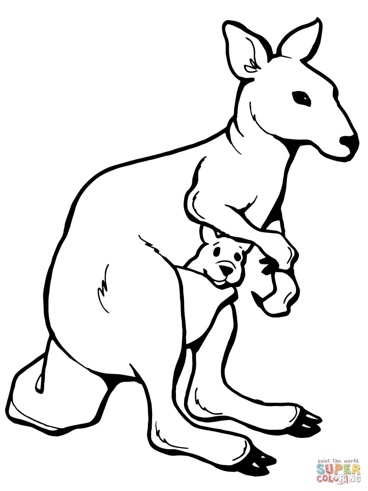 Kangaroo Drawing For Kids At Getdrawings