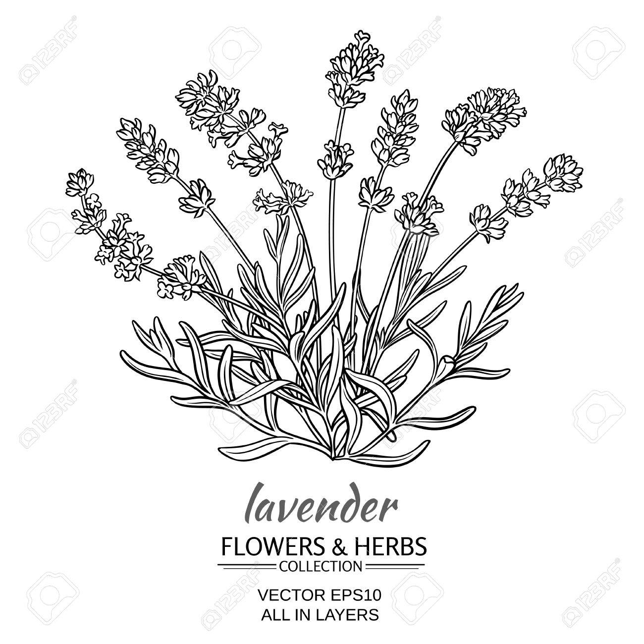 Lavender Bouquet Drawing At Getdrawings