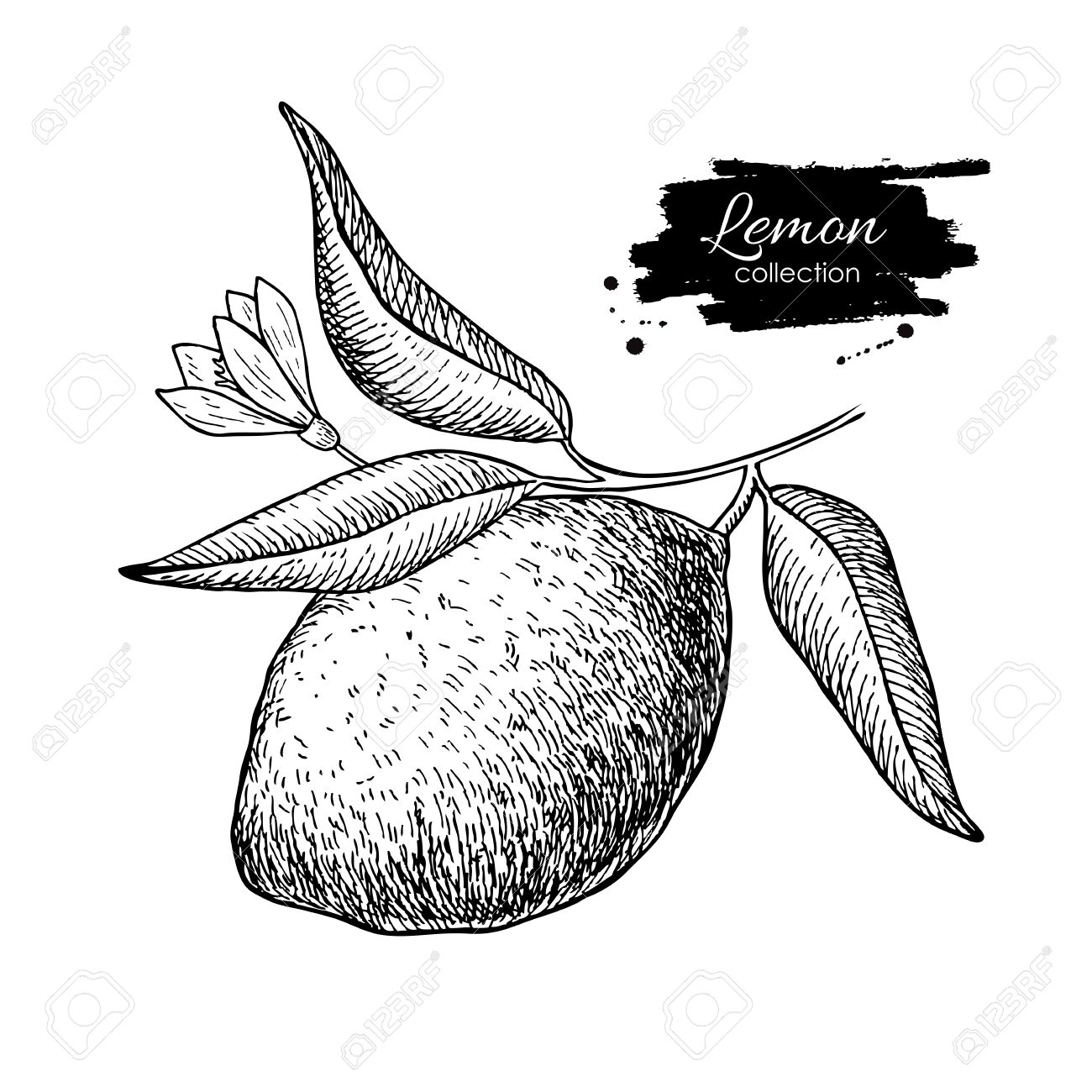 Lemon Tree Drawing At Getdrawings