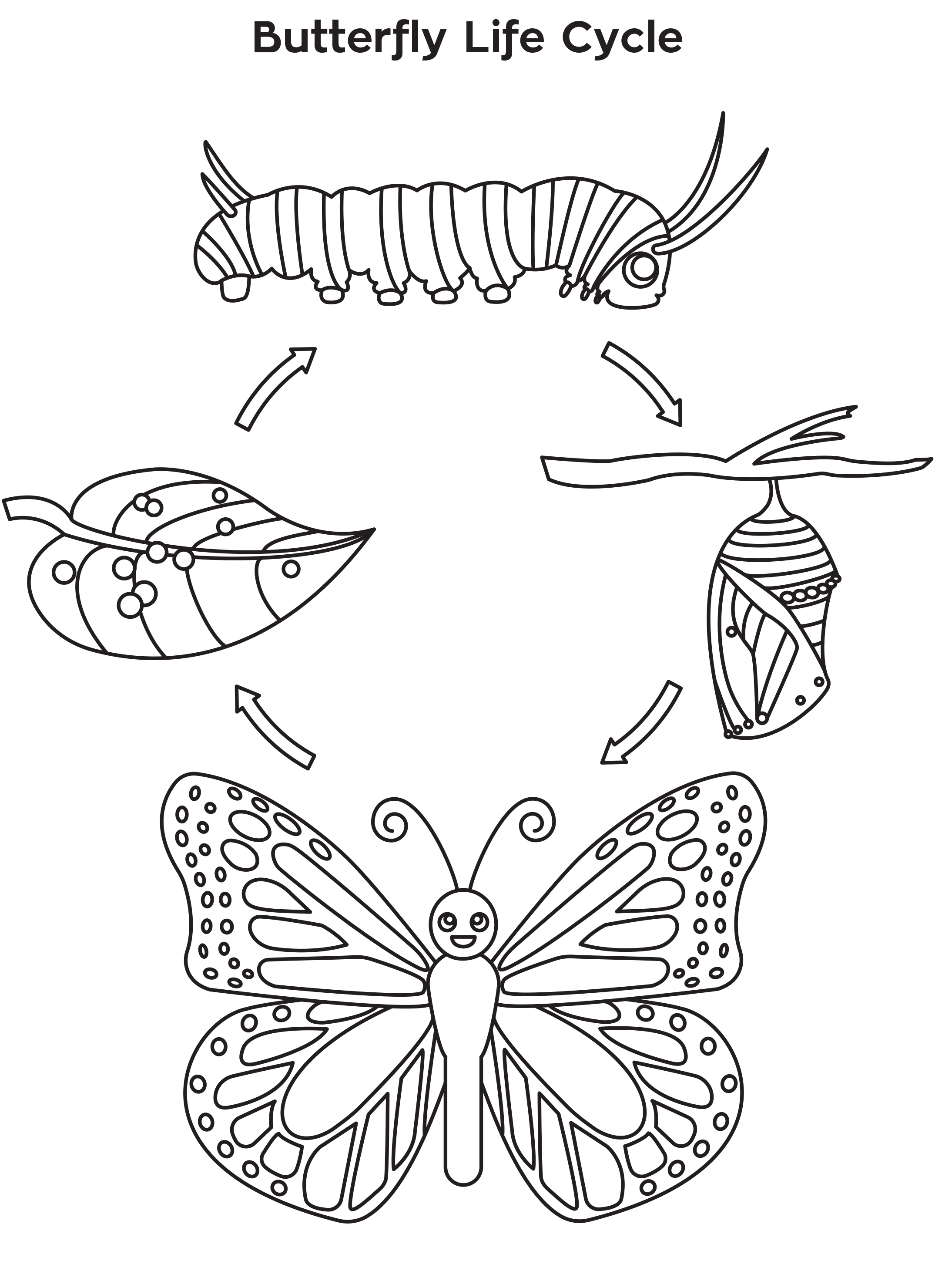 Life Cycle Of A Butterfly Drawing At Getdrawings