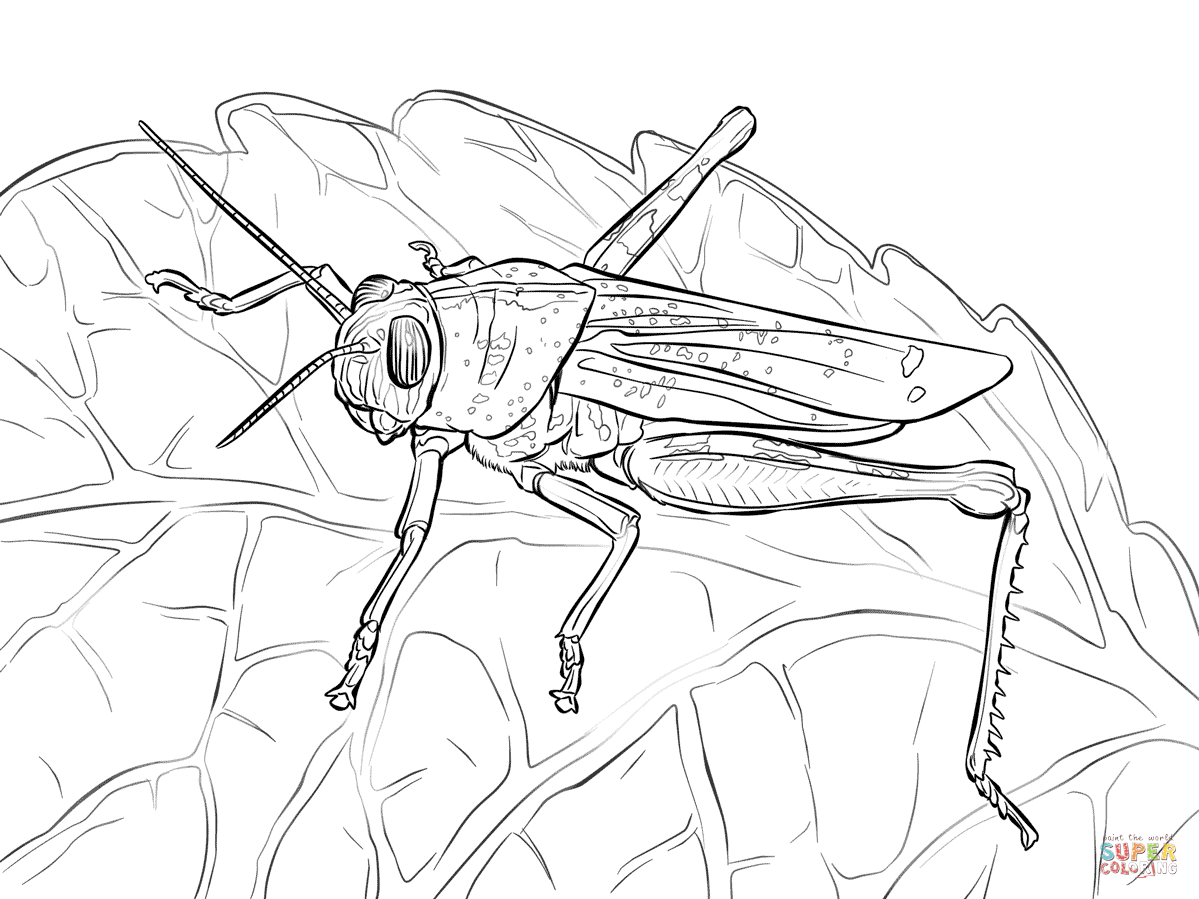 Line Drawing Of A Grasshopper At Getdrawings