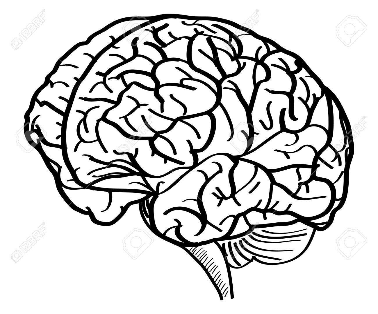 Line Drawing Of Brain At Free For