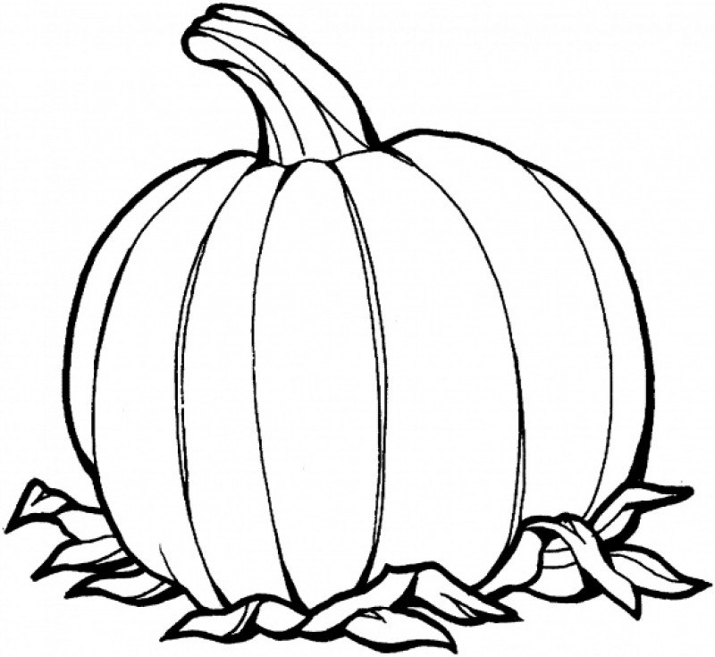 Line Drawing Of Pumpkin At Free For