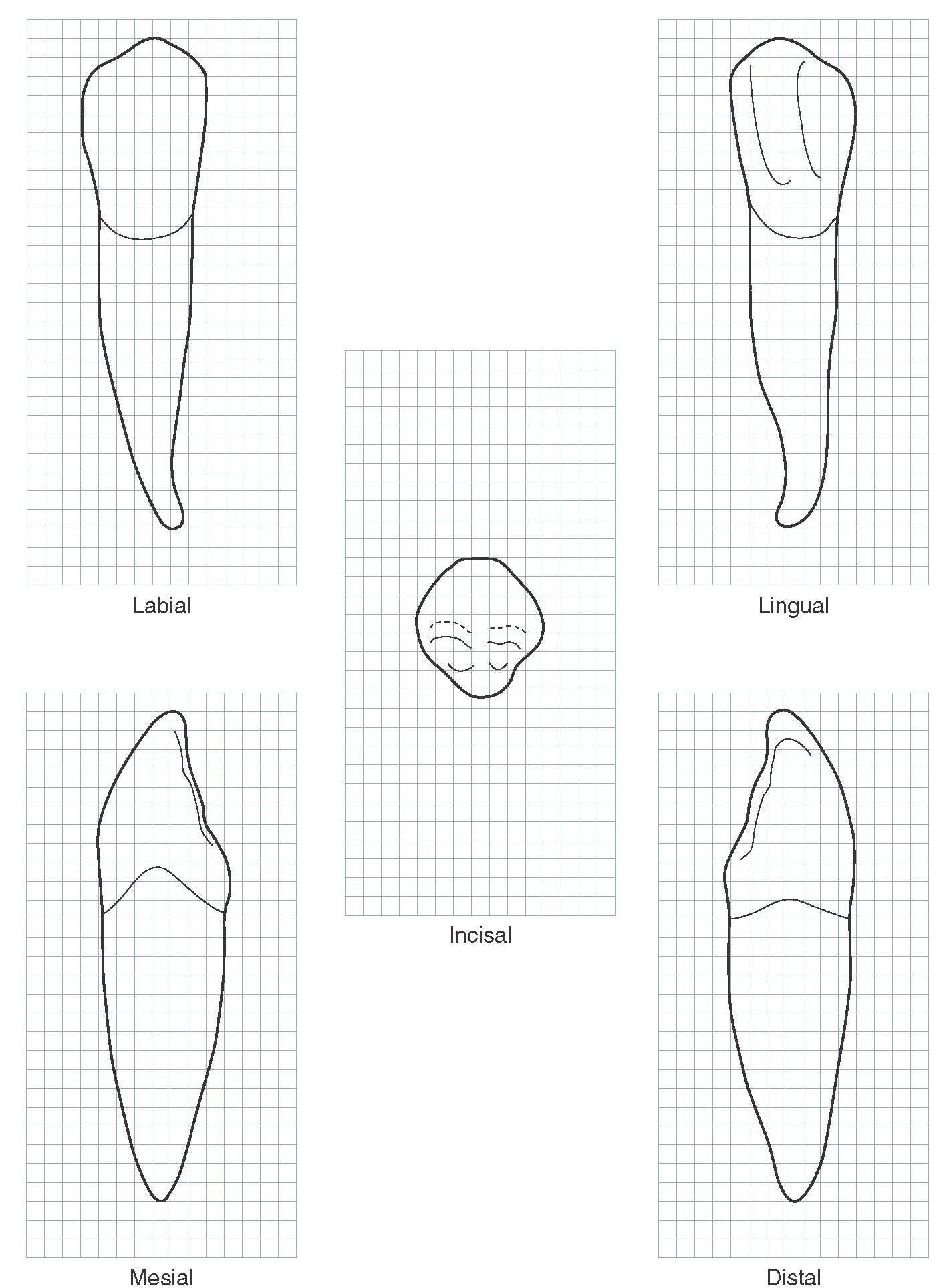 The Best Free Dental Drawing Images Download From 268