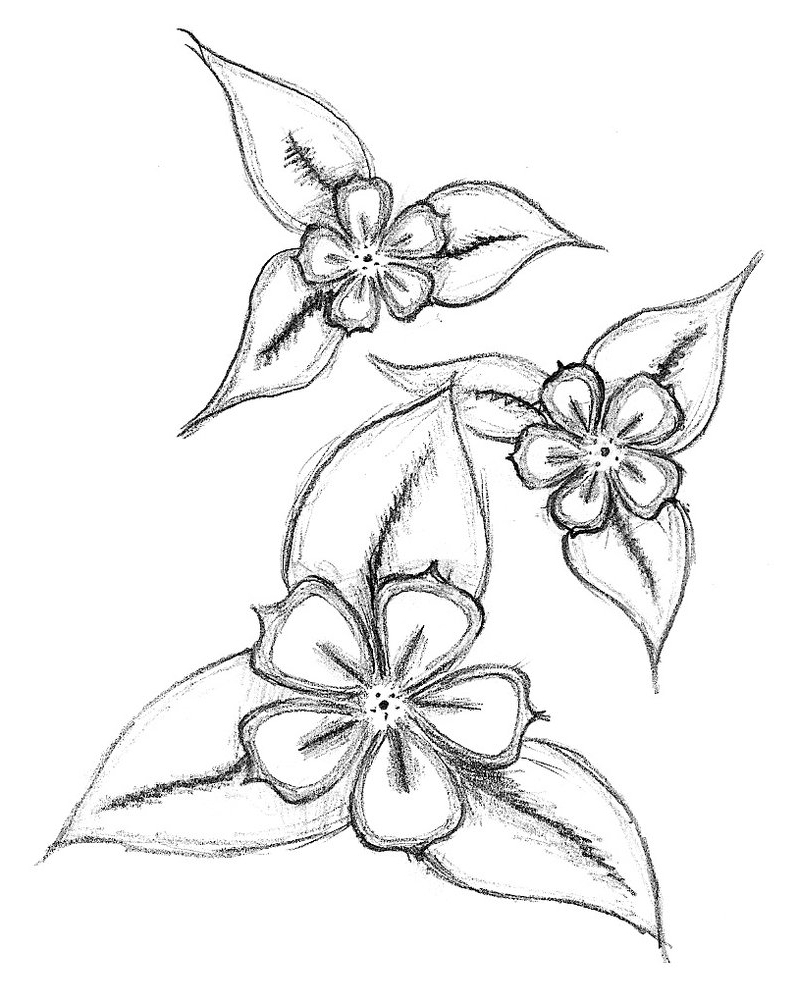 Flowers pencil drawing images