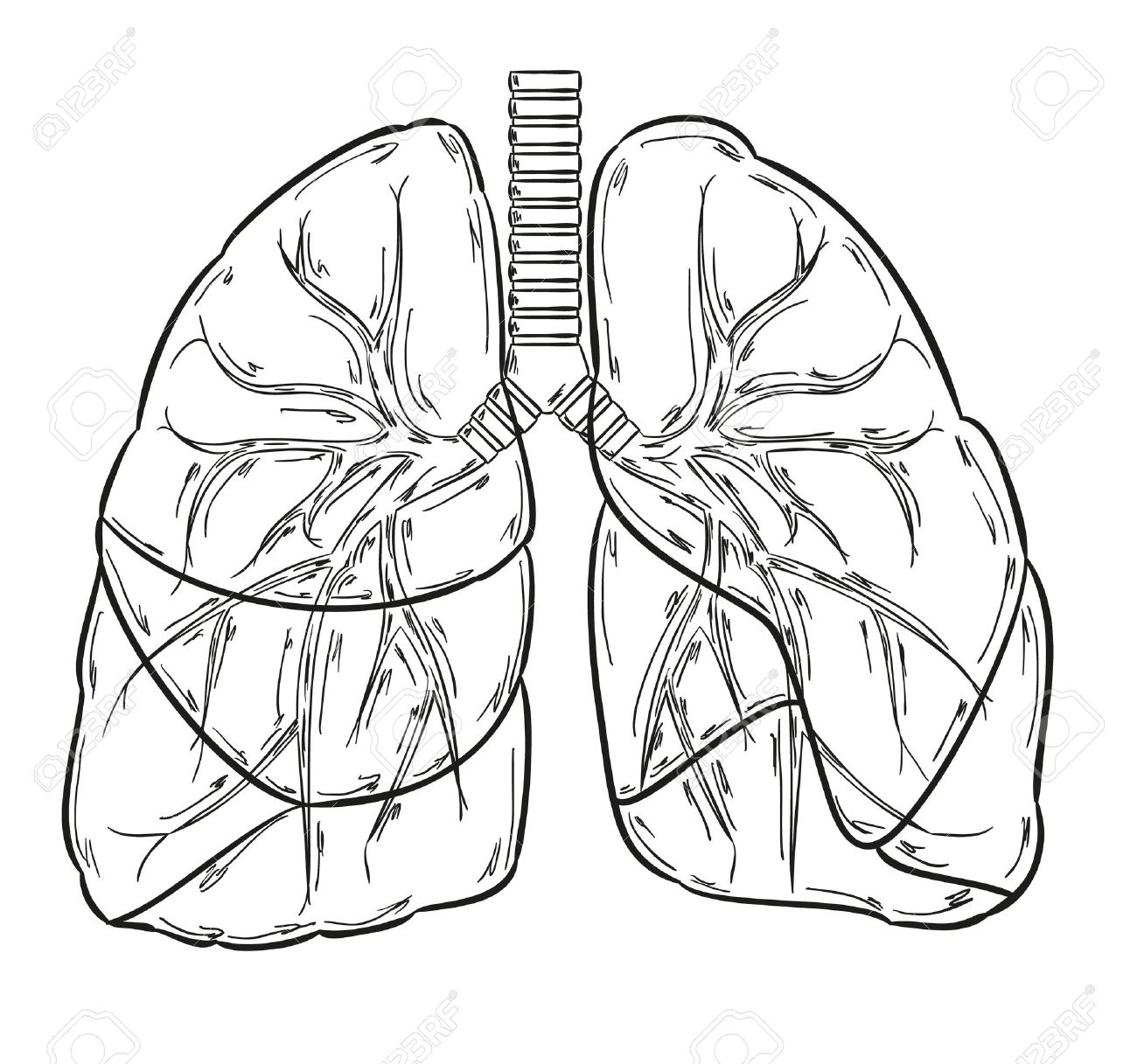 Lung Cancer Drawing At Getdrawings