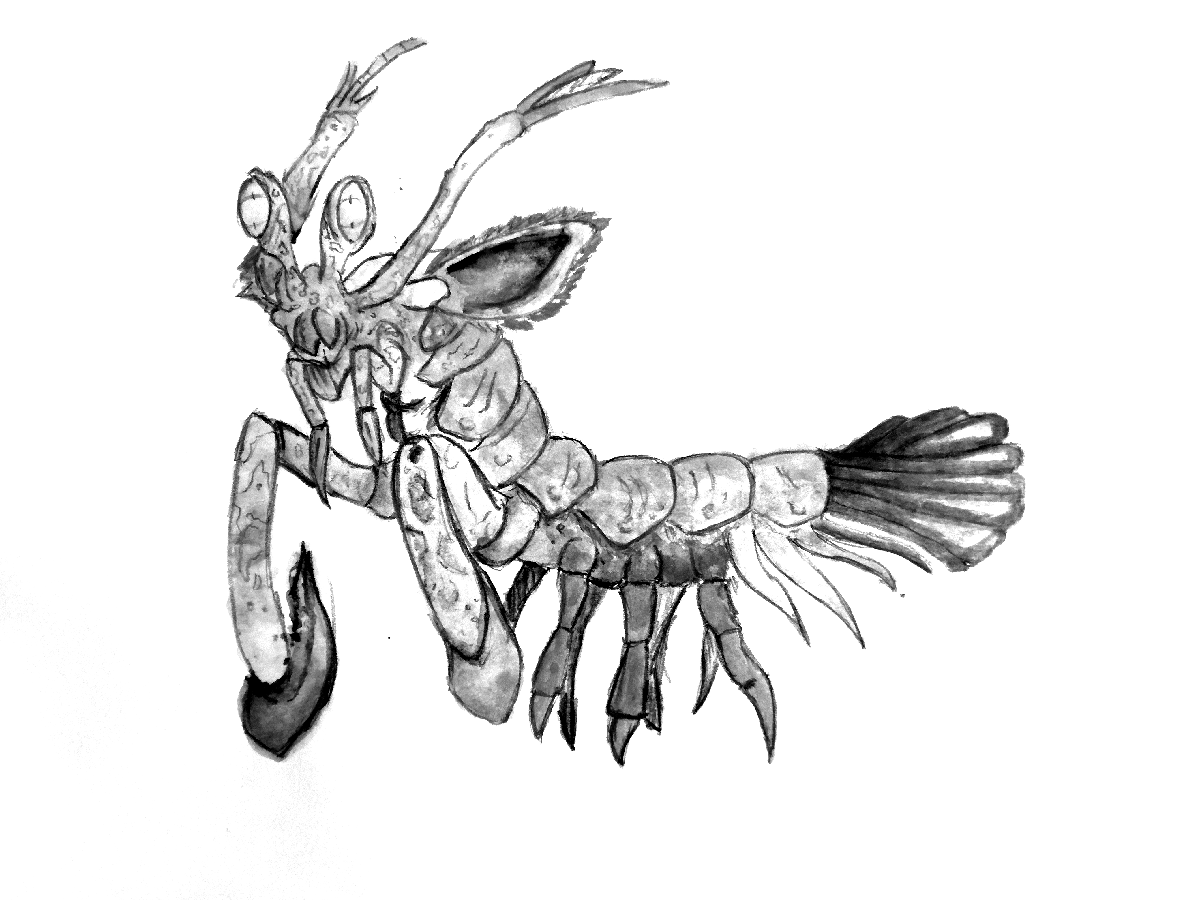 The Best Free Mantis Drawing Images Download From 135