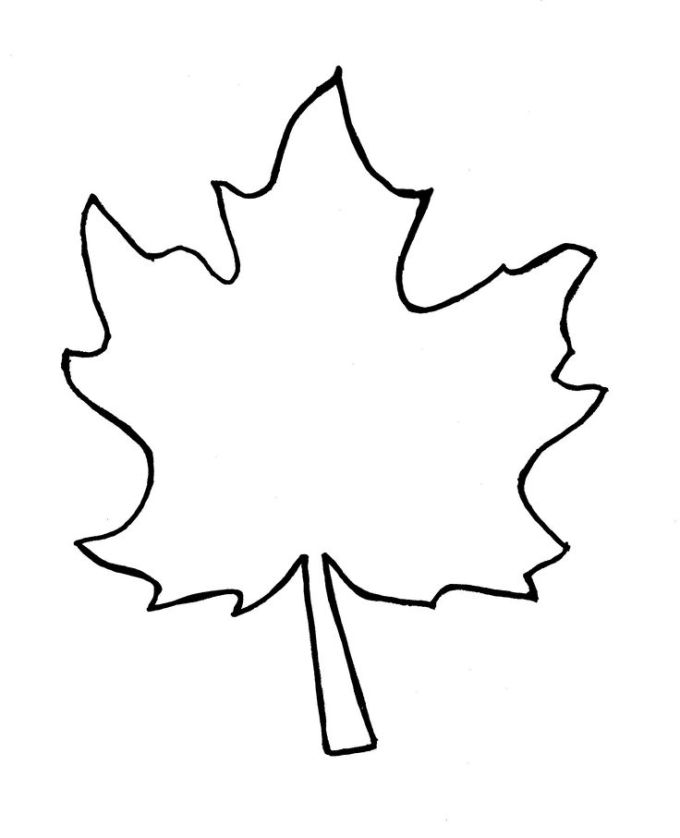 Maple Leaf Drawing Template At Getdrawings Com Free For Personal
