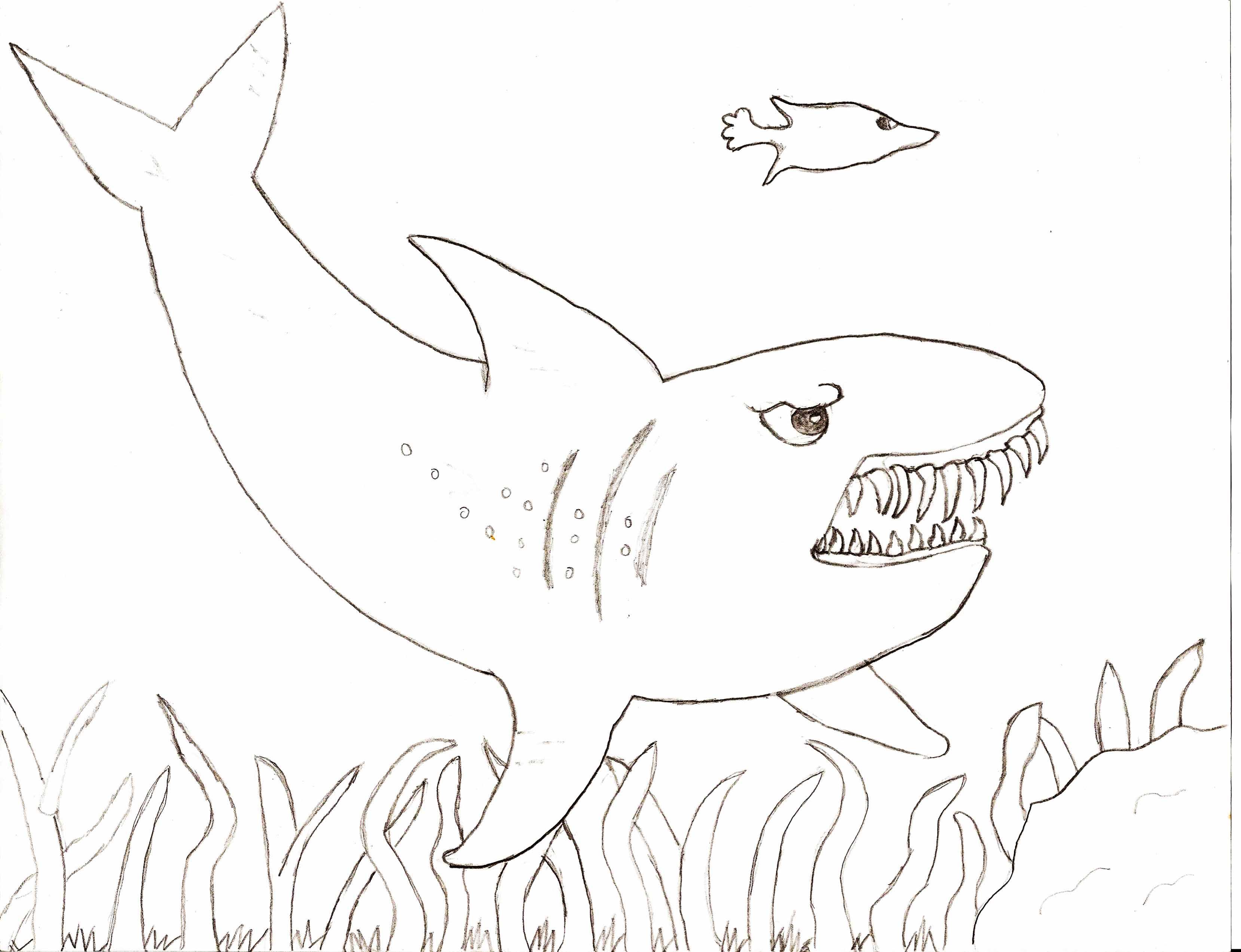 Megalodon Shark Drawing At Getdrawings