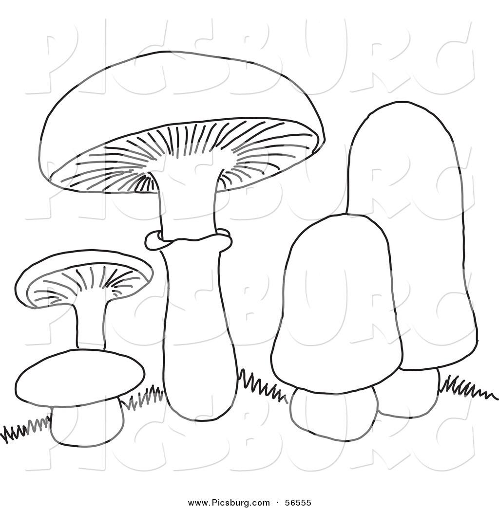 Mushroom Line Drawing At Getdrawings