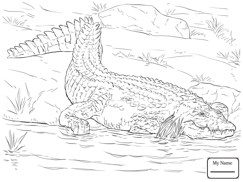 Nile Crocodile Drawing At Getdrawings