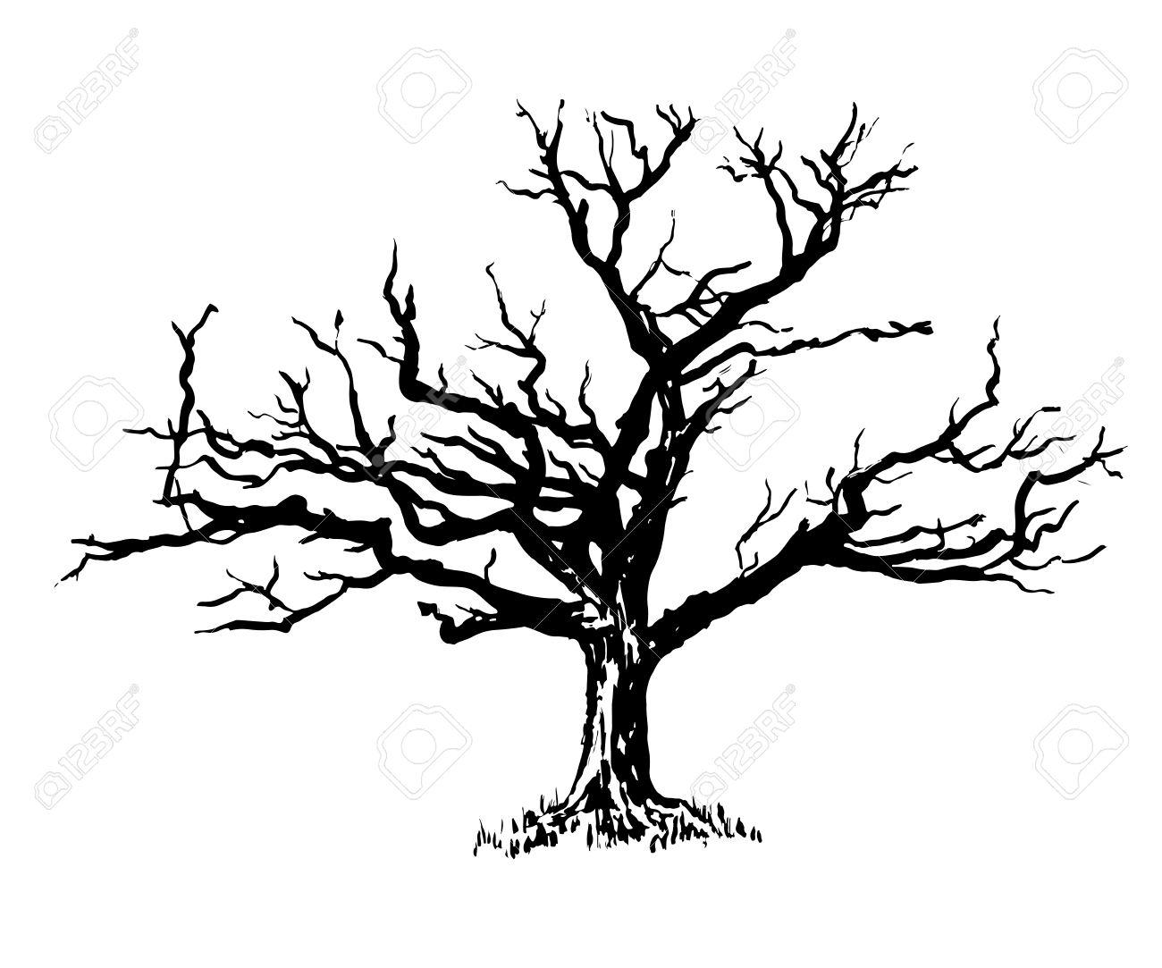 Old Oak Tree Drawing At Getdrawings