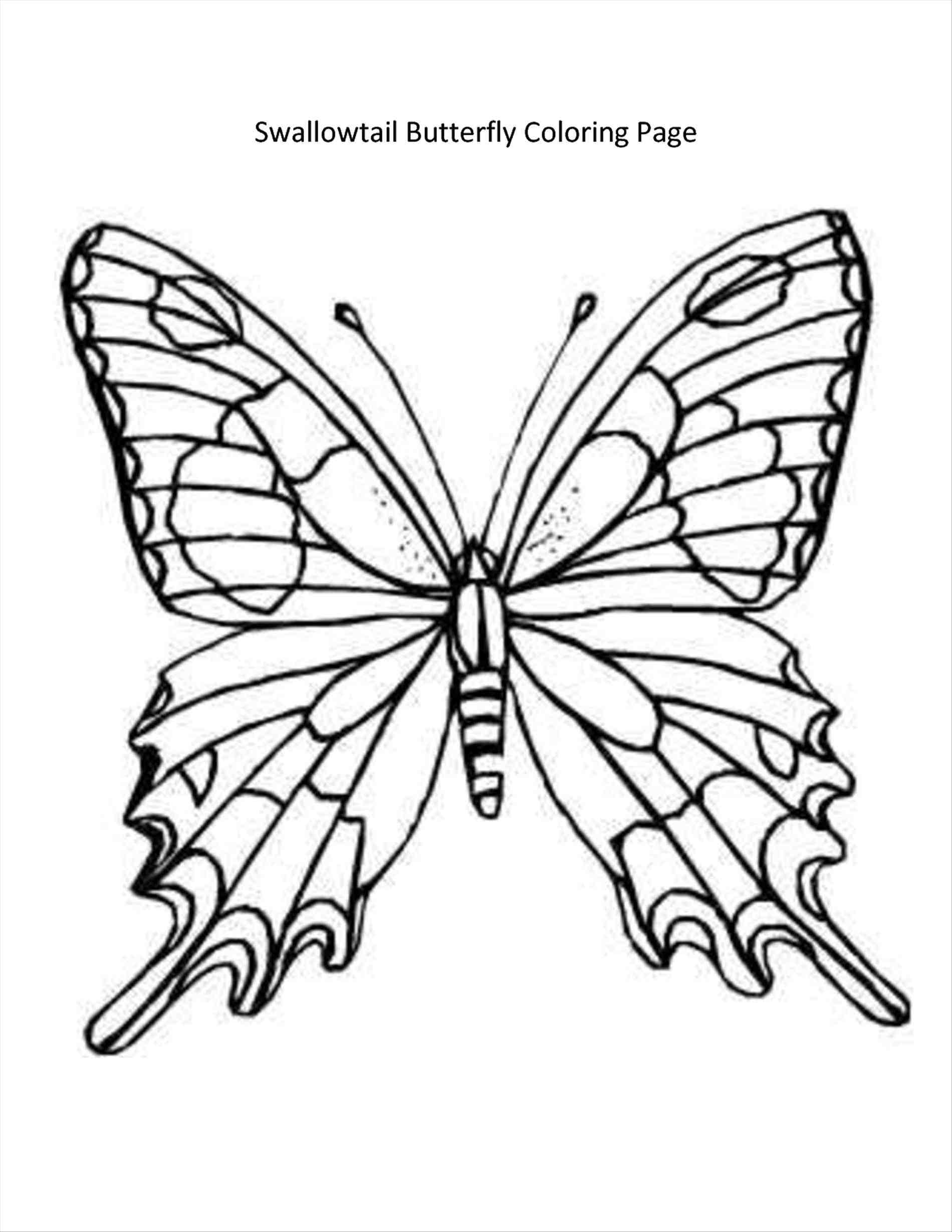 Outline Drawing Of A Butterfly At Getdrawings