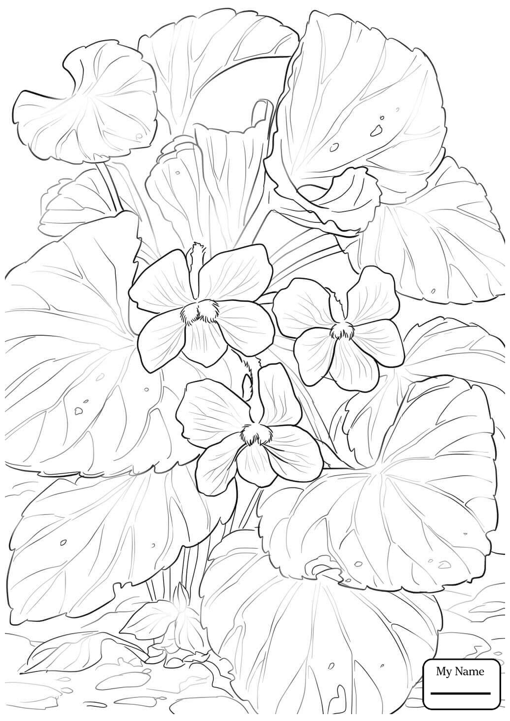 Pansy Flower Drawing At Getdrawings