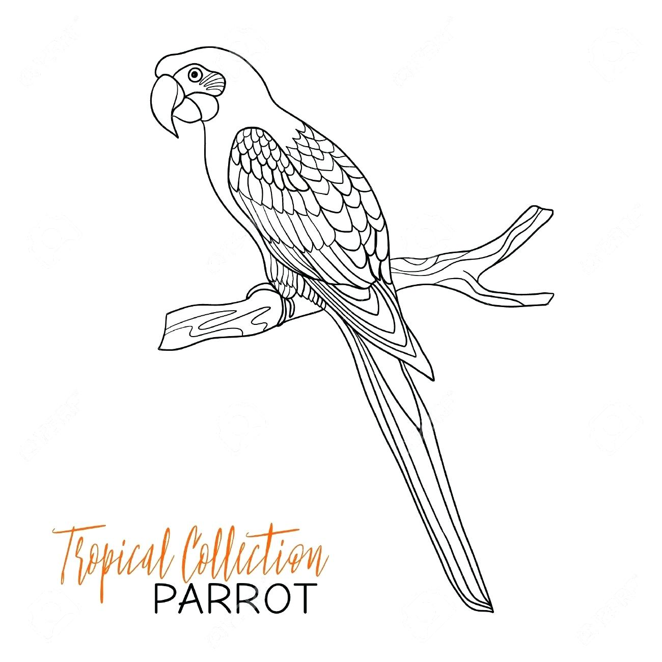 Parakeet Drawing At Getdrawings