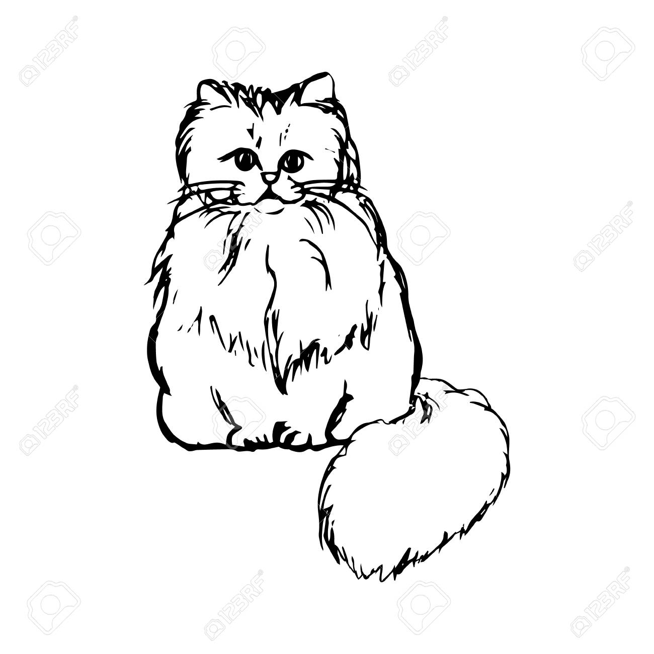 Persian Cat Drawing At Getdrawings