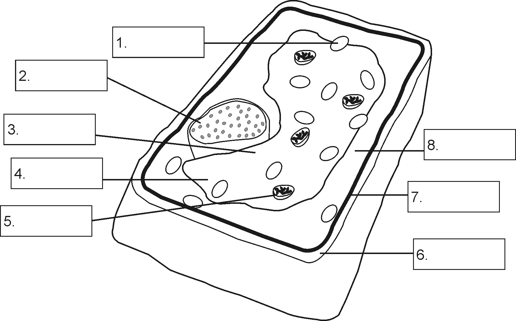 Plant Cell Drawing At Getdrawings