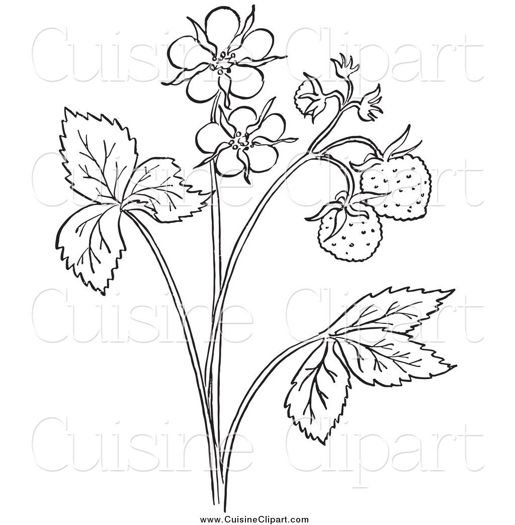 Plant Drawing Black And White At Getdrawings