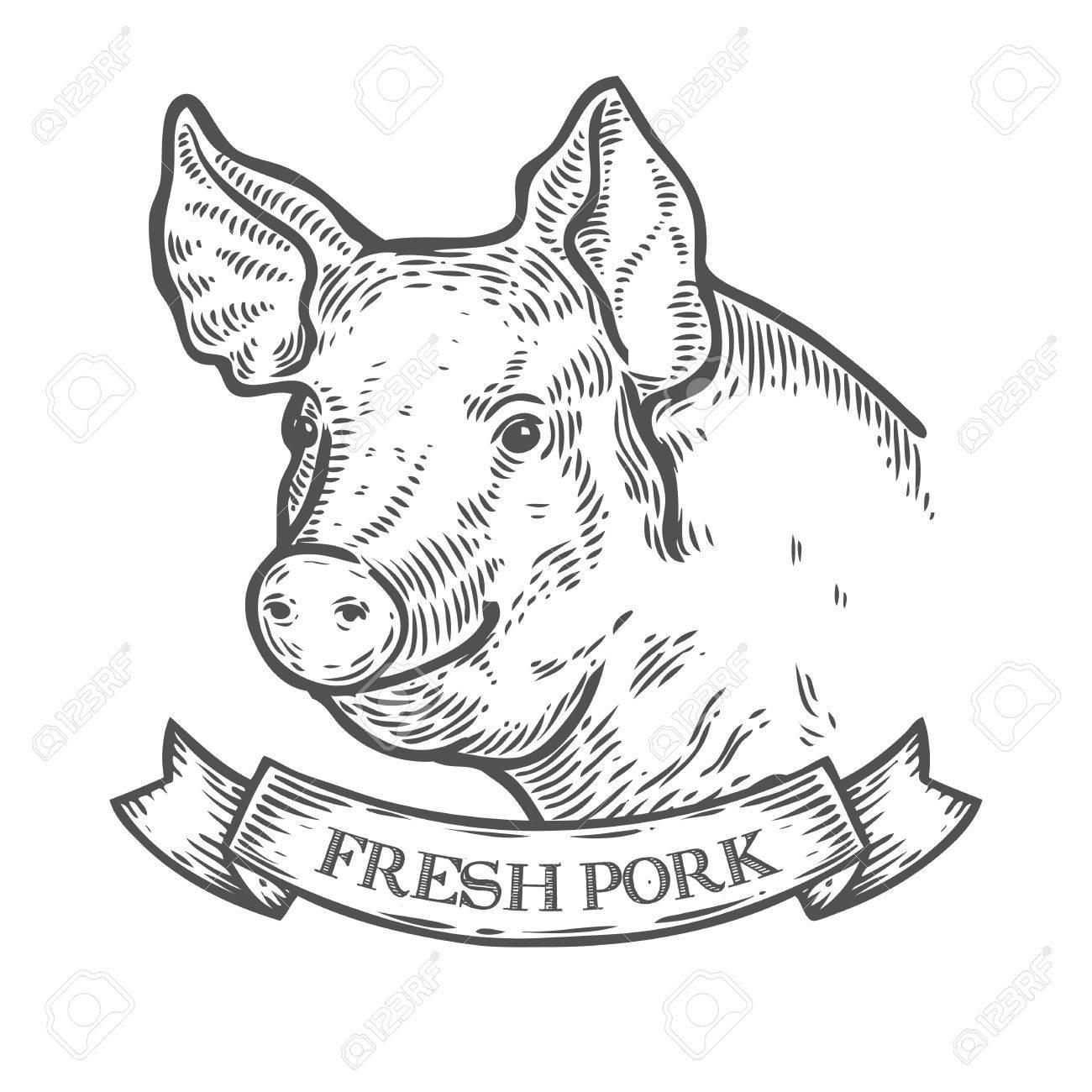 Pork Drawing At Getdrawings