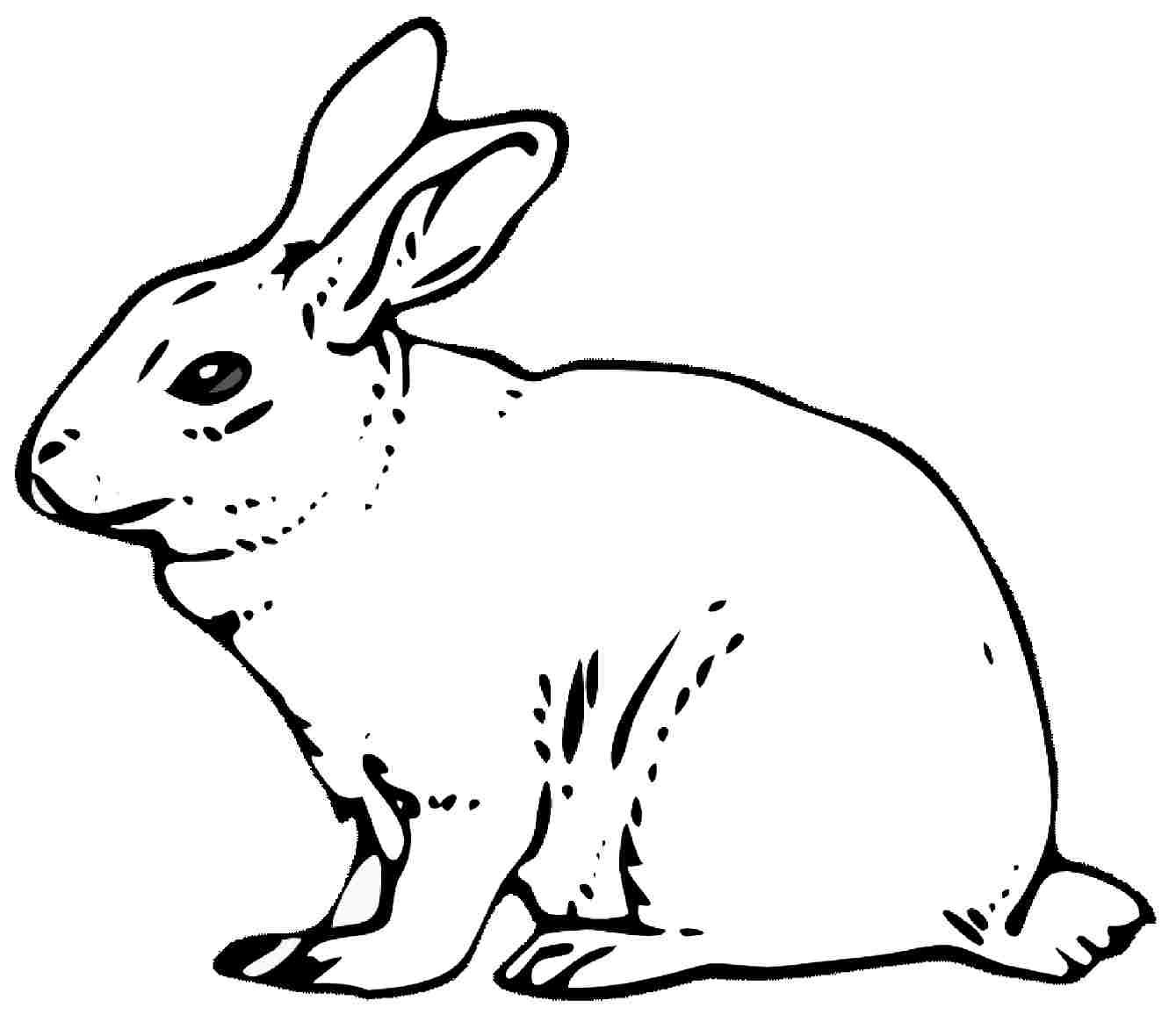 Rabit Drawing At Getdrawings
