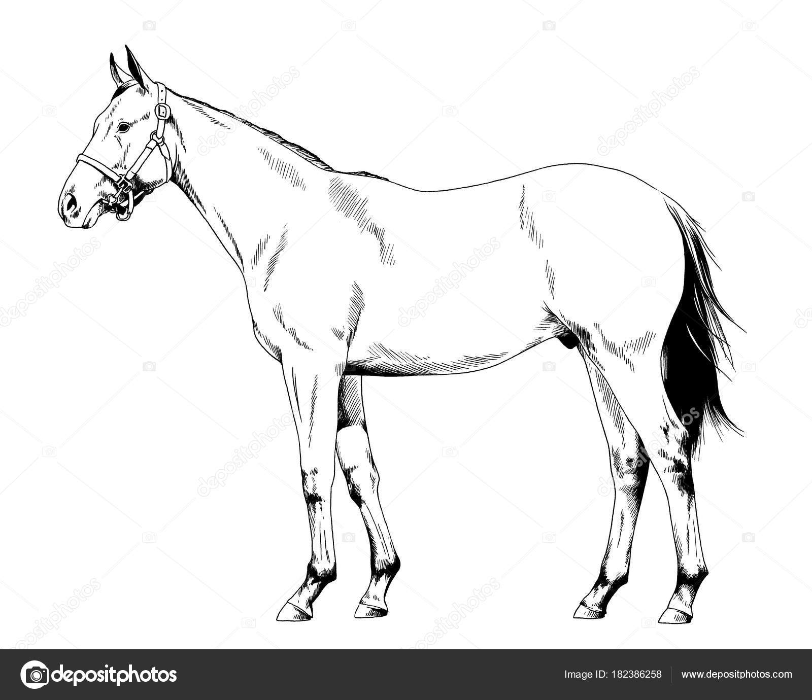 Racehorse Drawing At Getdrawings