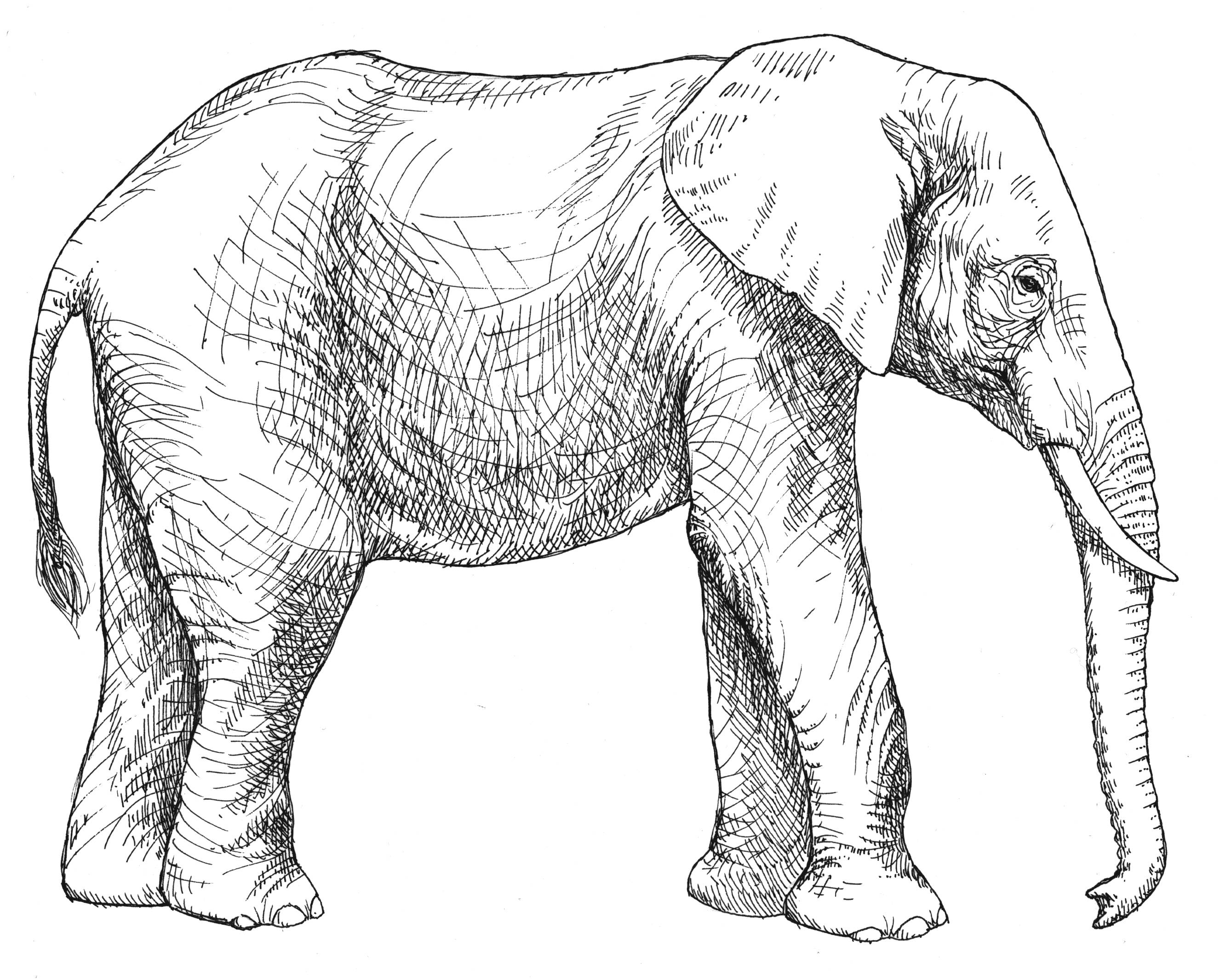 Realistic Drawing Of Animals At Getdrawings