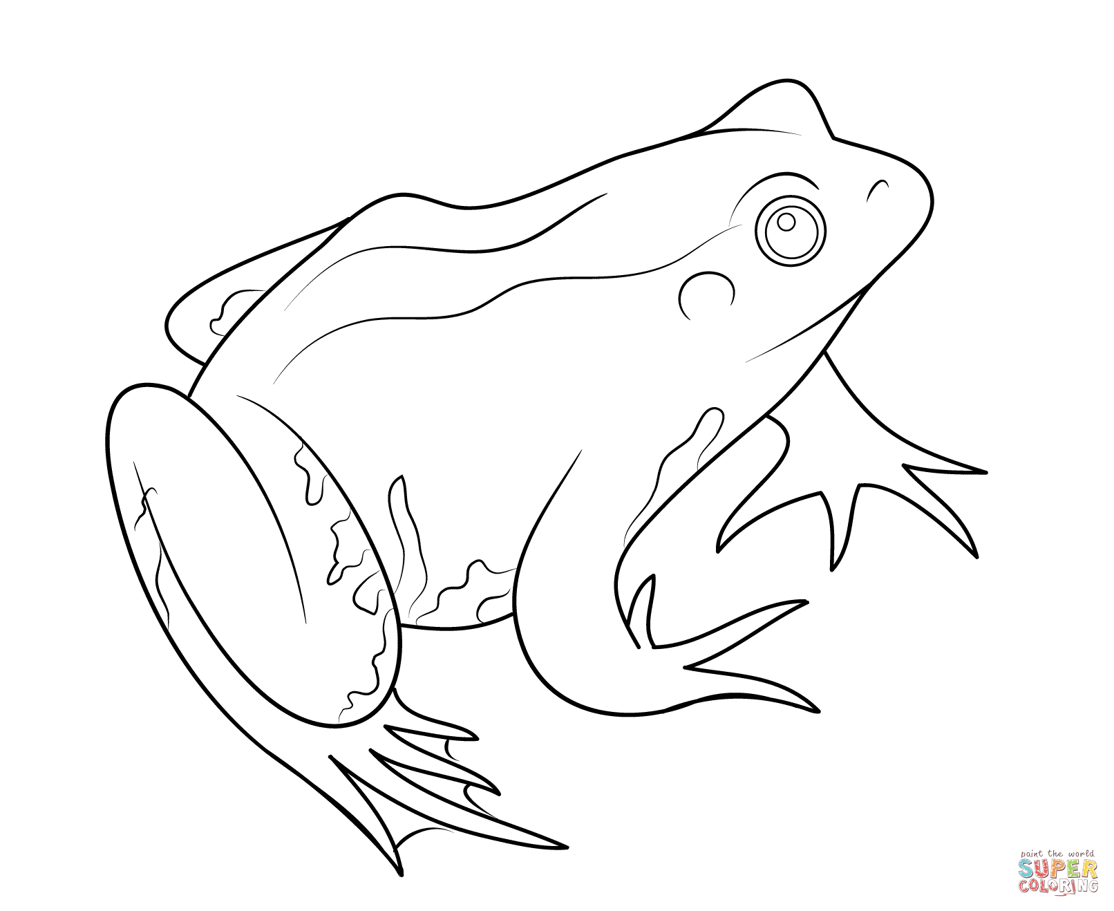 Realistic Frog Drawing At Getdrawings