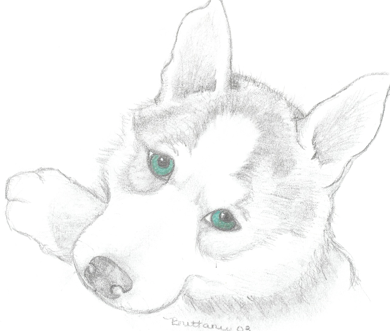 Realistic Puppy Drawing At Getdrawings