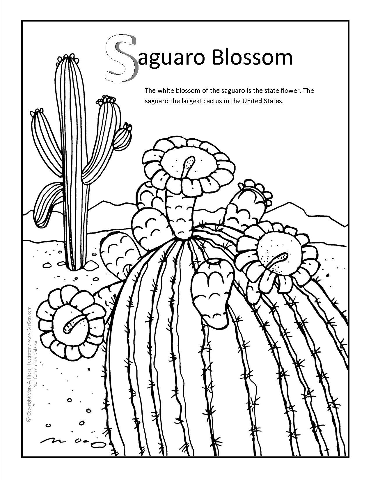 Saguaro Drawing At Getdrawings