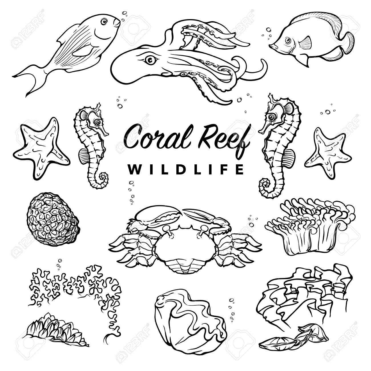 Sea Coral Drawing At Getdrawings