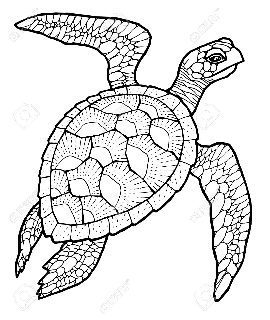 Sea Turtle Drawing At Getdrawings