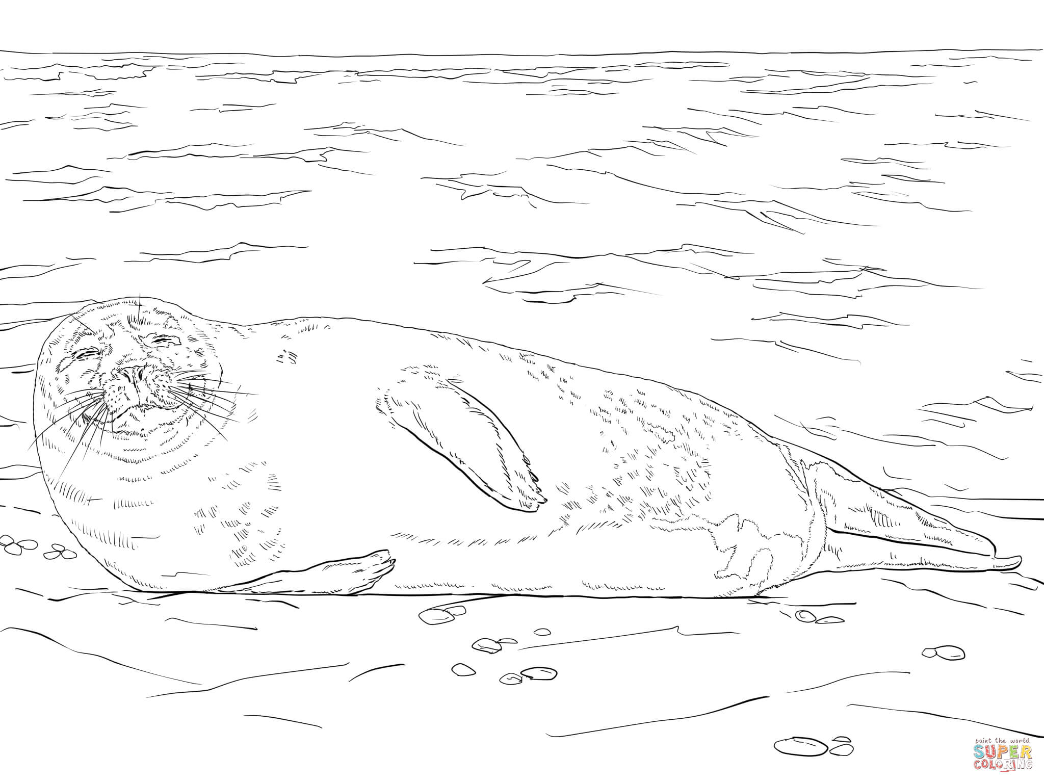 Seal Drawing Step By Step At Getdrawings