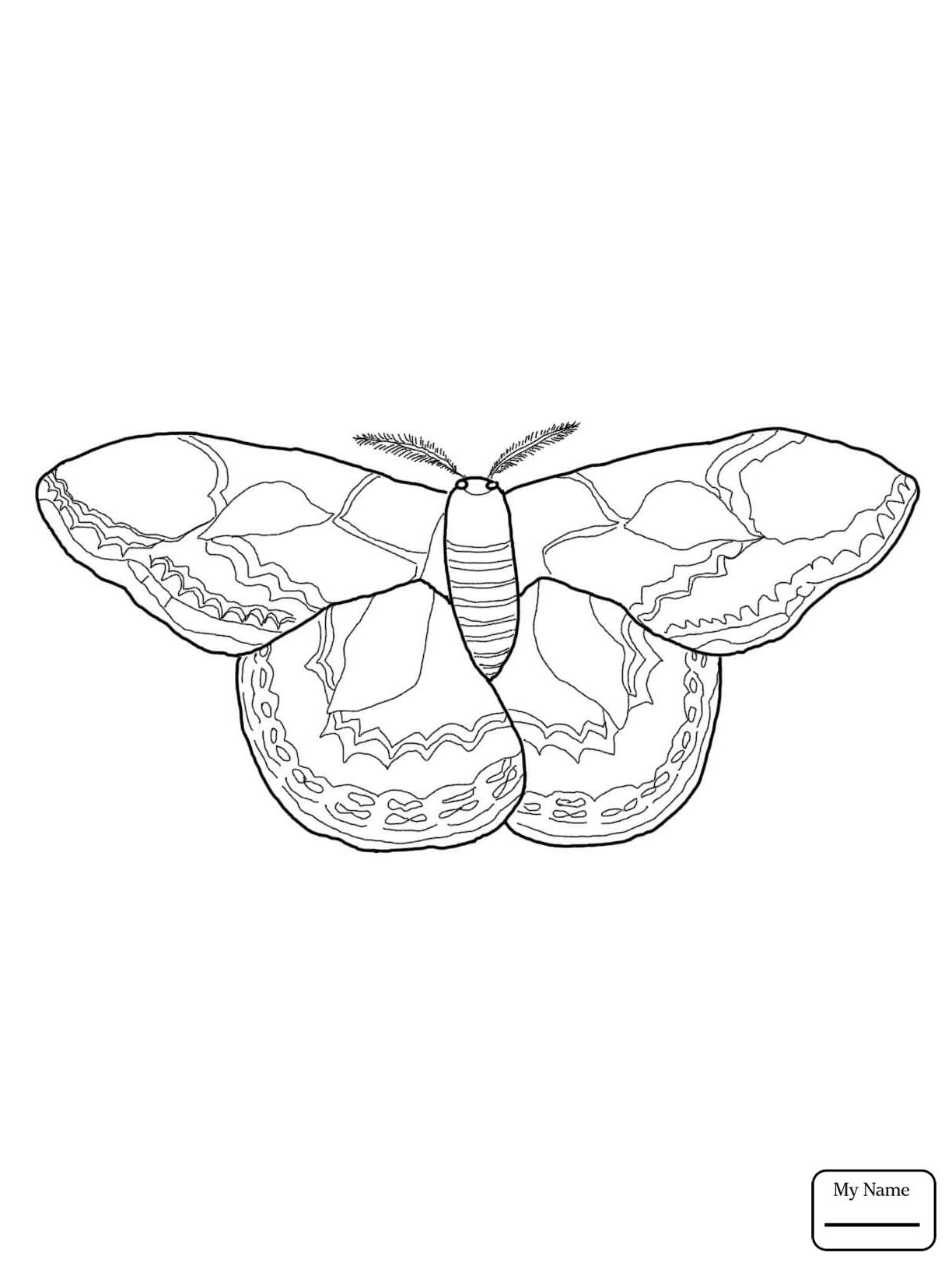 Silkworm Drawing At Getdrawings